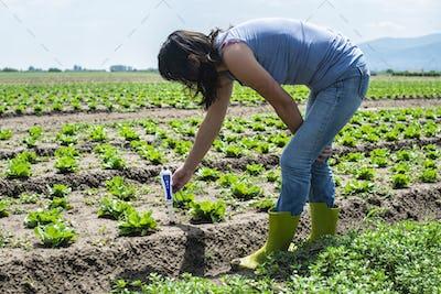 Woman use digital soil meter in the soil. Lettuce plants. Sunny