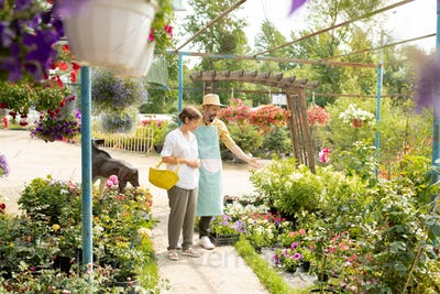 Mature gardener in hat and apron showing white flowers to one of clients