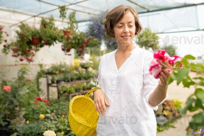 Happy young female owner of floral shop wit basket looking at bunch of petunia