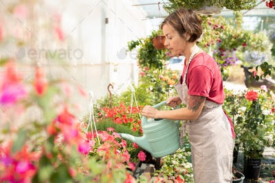 Young female gardener or greenhouse worker taking care of plants on flowerbed