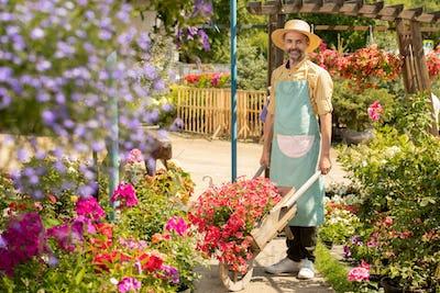 Mature bearded male gardener with cart standing between flowerbeds