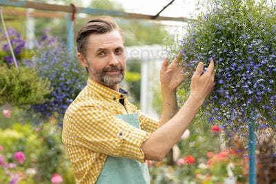 Successful middle aged gardener in apron standing by small blooming flowers
