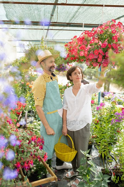 Two contemporary flower vendors looking at new sorts of petunia in pots