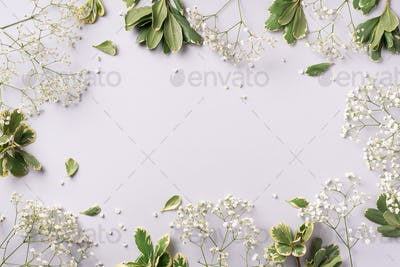 Small white gypsophila flowers on pastel grey background. Women's Day, Mother's Day