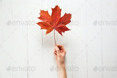 Red maple leaf in woman's hand on white wooden table