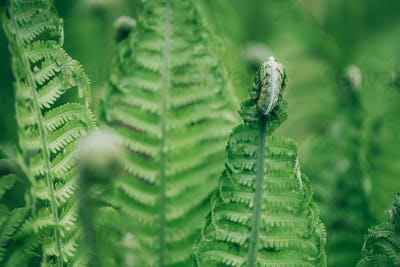 Green ferns leaves. Natural foliage background. Floral texture. Nature concept.