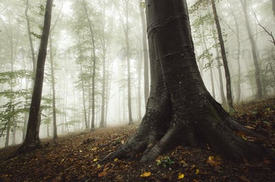 Low angle forest scenery with tree roots and autumn leaves on th
