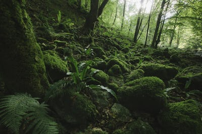 moss and lush vegetation  in green natural forest