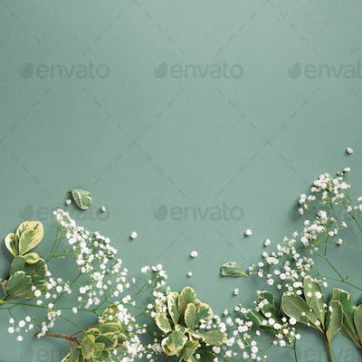 Small white gypsophila flowers on pastel green background. Women's Day, Mother's Day