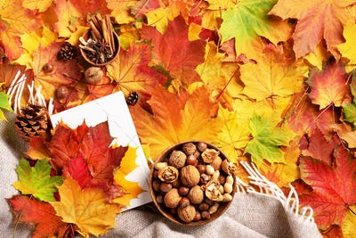 Reading time. Autumn flat lay. White book, wooden bowl of nuts, coffee cup, cone, cinnamon over