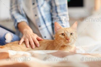 Beautiful Ginger Cat at Home