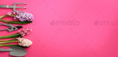 Garden pruner, rake, with flowers on pink punchy pastel background. Banner with copy space. Spring