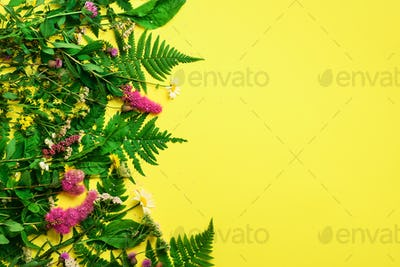 Wild summer flower on yellow background. Creative flat layout pattern with copy space, top view