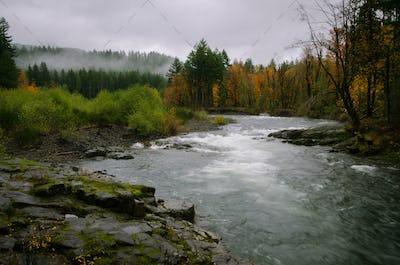 Wilson River Tillamook Forest