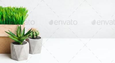Succulent and grassy plants in different pots, free space