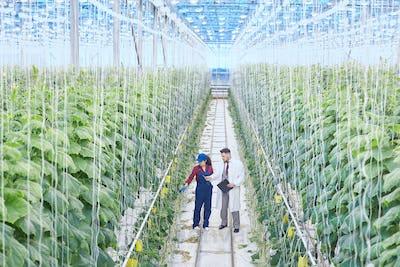 Scientist on Industrial Plantation