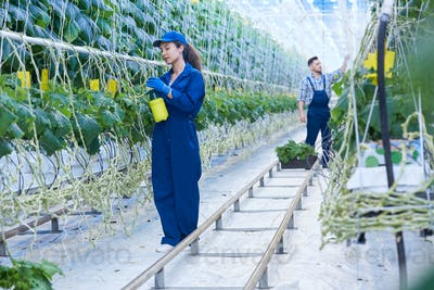 Two Workers in Greenhouse
