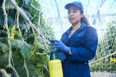Plantation Worker Spray Treating Plants