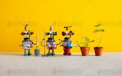 Surprised robots gardeners looks at a sprouts of strawberry