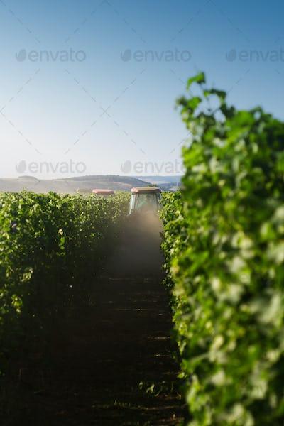 red tractors working in the vineyard
