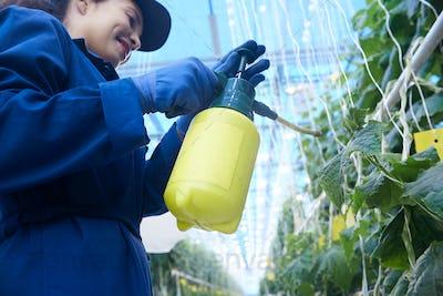 Smiling Plantation Worker Spray Treating Plants