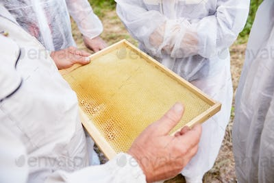 Apiarist Collecting Honey and Wax