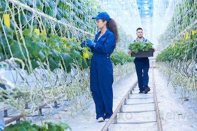 Modern Plantation Workers