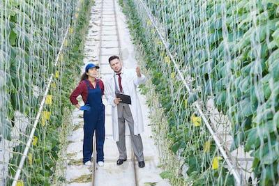 Scientist Working at Industrial Plantation