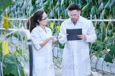 Two Agricultural Engineers in Plantation