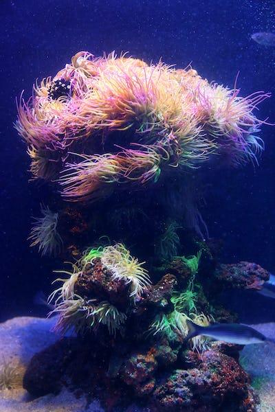 Marine life, close-up in aquarium