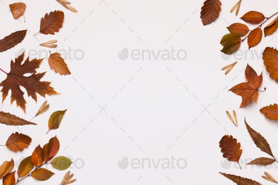 Different colored brown leaves frame on white background