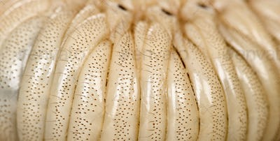 Close-up of Larva of a Hercules beetle, Dynastes hercules
