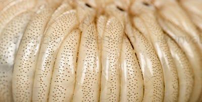 Close-up of Larva of a Hercules beetle, Dynastes hercules