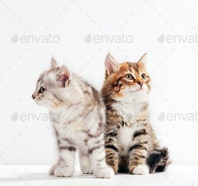 Two cats pose as if they were estranged or angry