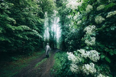 Man and white flowers in forest after rain