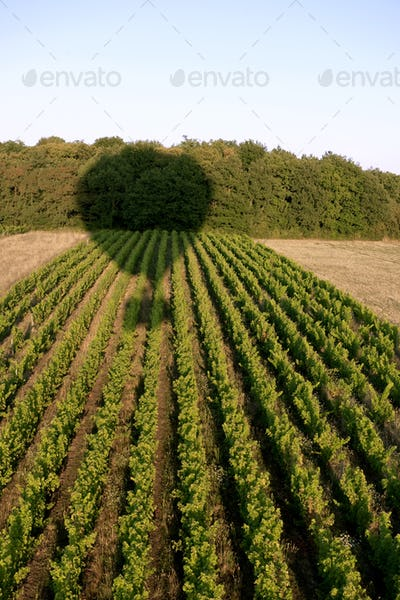 Shadow of a hot air balloon over field