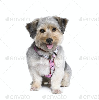 Cross Breed dog, 4 years old, in front of white background, studio shot