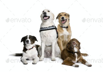 Group of bastard dogs sitting in front of white background, studio shot