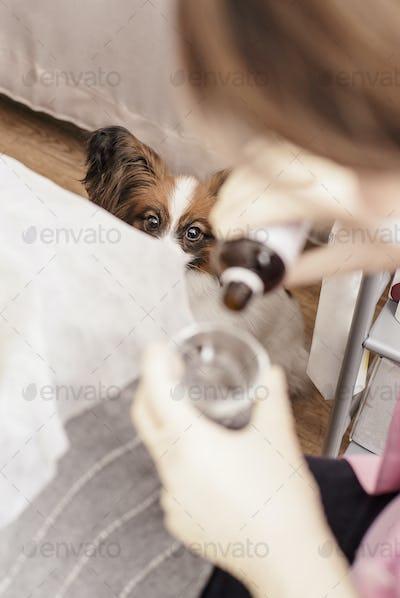 Cute dog afraid of looking like a doctor vet pours medicine