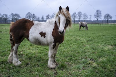 Horse with humanlike emotion and hair fluttering in the wind