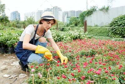 Garden worker taking care of plants