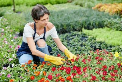 Garden worker prunning flowers