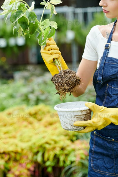 Woman taking plant out of pot
