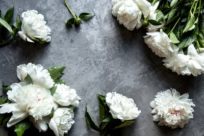 Beautiful peonies on grey concrete background. Wedding, , gift or women's day concept