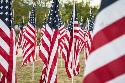 Field of Veterans Day American Flags Waving in the Breeze.