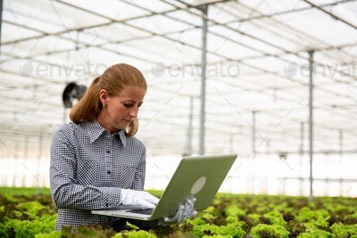 Researcher woman notices something in laptop while sitting next to a salad plantation