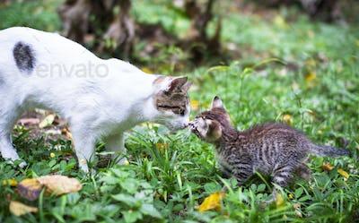 Tabby Kitten Meets an Older White Cat in the Garden