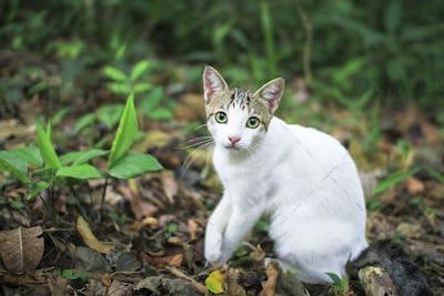 White Cat Sitting on the Jungle Floor