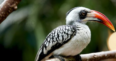 Yellow billed hornbill sitting on tree