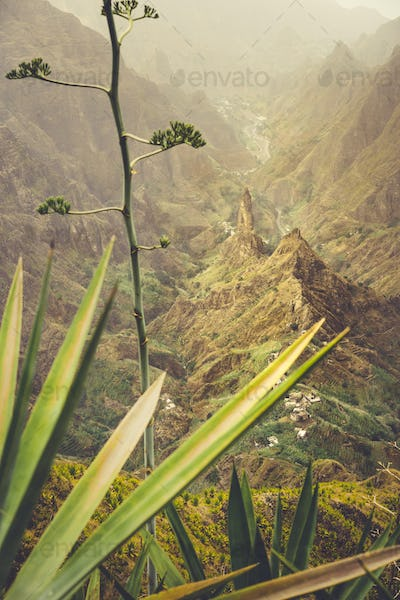 Close up of agave plants and rocky mountains in background in Xo-xo valley in Santo Antao island